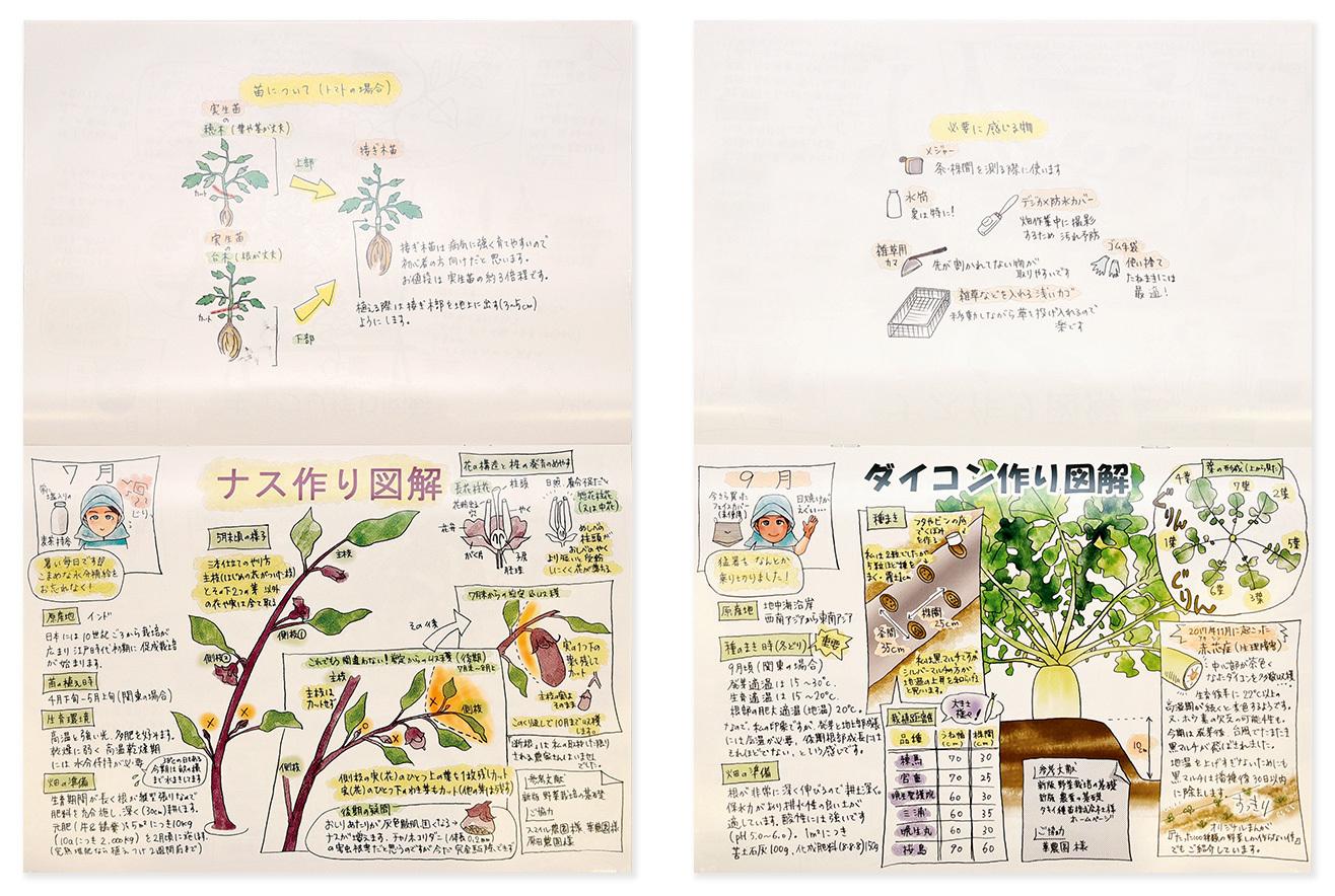 このページに驚いた! ナスを収穫するためには、 正しい剪定が必要。