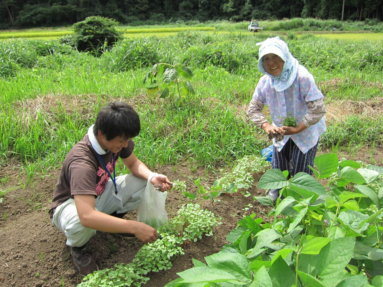 キャプション宿泊中、農業を体験することもできる
