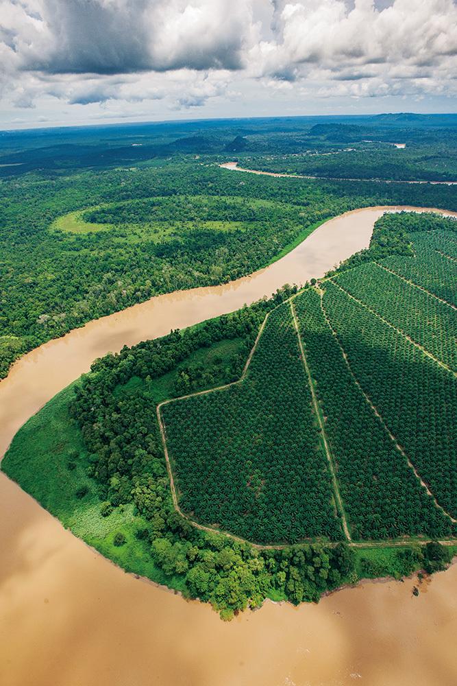 一方で、キナバタンガン川流域ではアブラヤシのプランテーションが森を侵食することで、動物は川岸に追いやられ、棲息地の分断が進む。そして農園側にとっては、ゾウの侵入が大きな問題になっている。