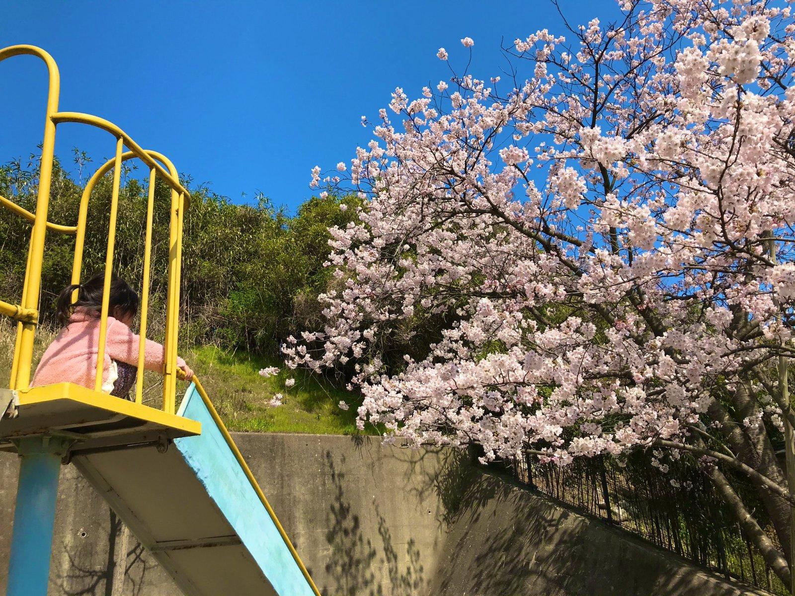 すべり台と桜。