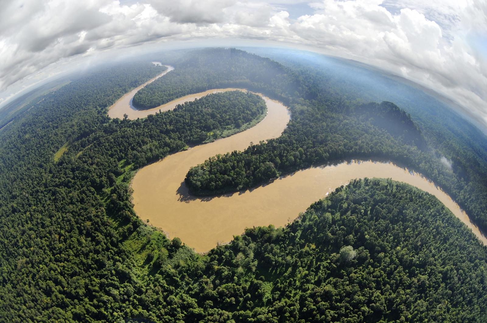 マレーシアボルネオ島のジャングル