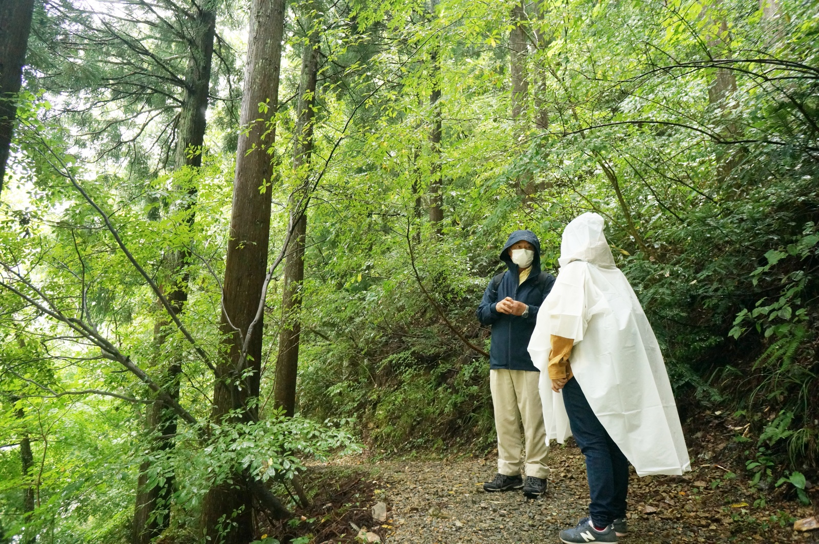 森林セラピー案内風景