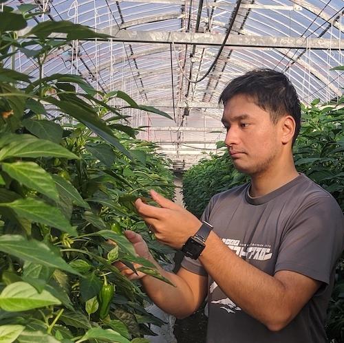 高知県農業振興部 農業イノベーション推進課 IoP推進室 主任(IoP推進機構担当)松島 弘敏 氏