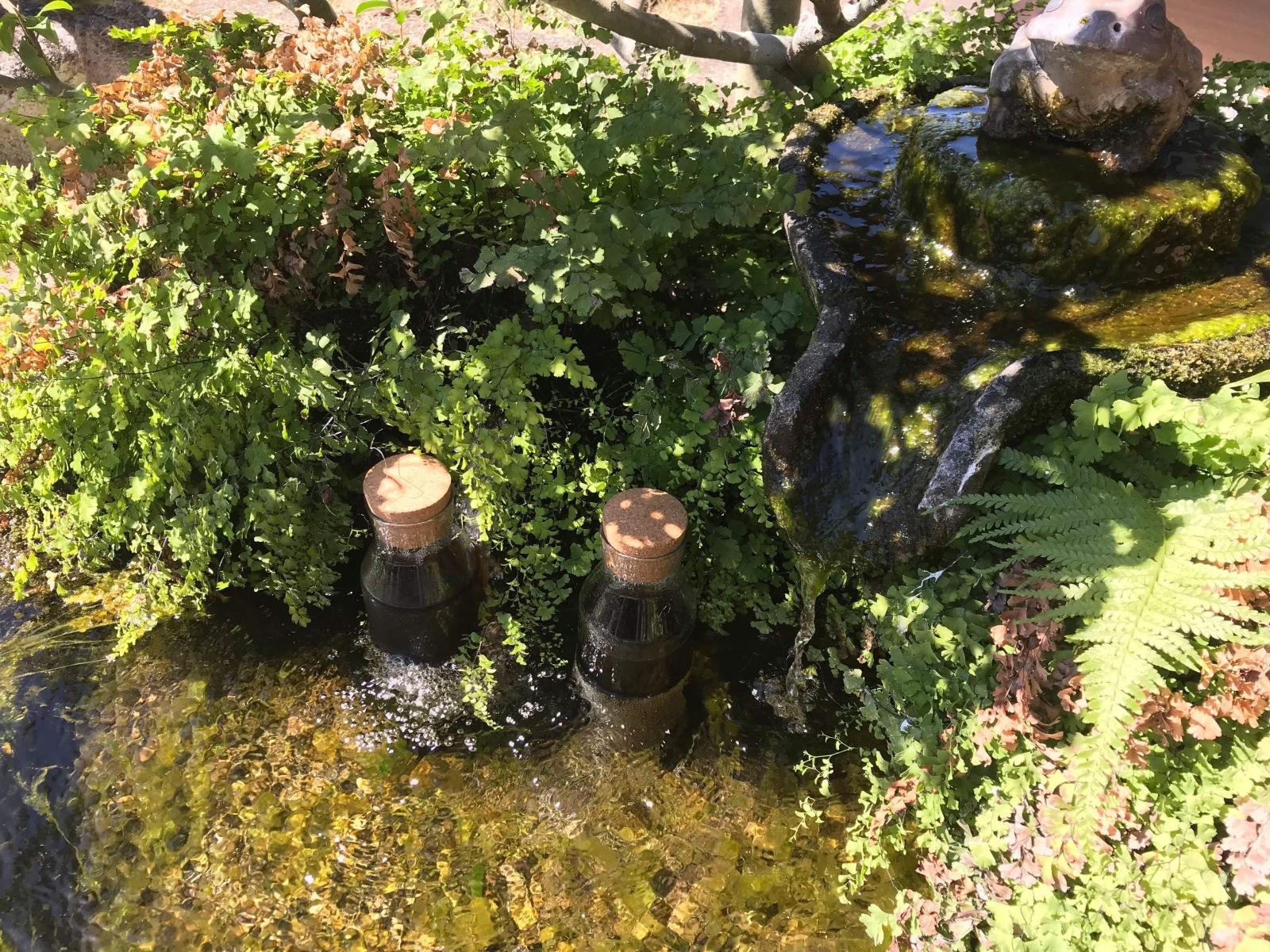 敷地内の湧き水で麦茶を冷やす