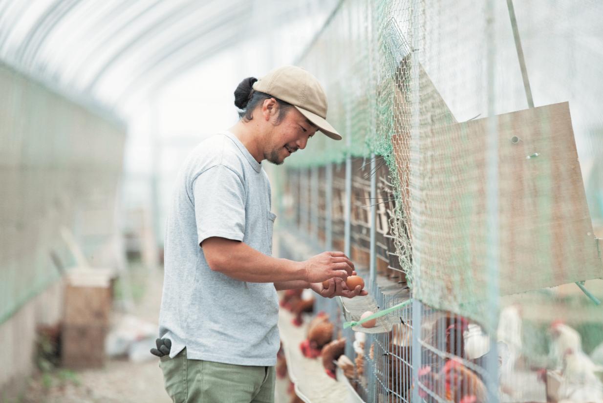 卵は毎日産まれ、作業がある。復旧の鶏舎づくりは少しずつしか進まない。