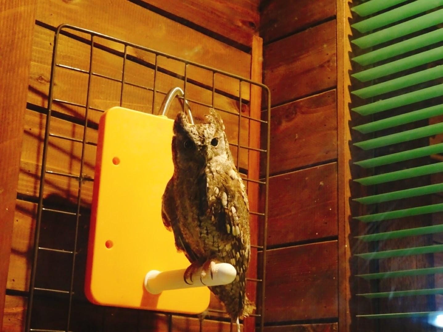 看板フクロウのちょびちゃんはお休みの日もあり