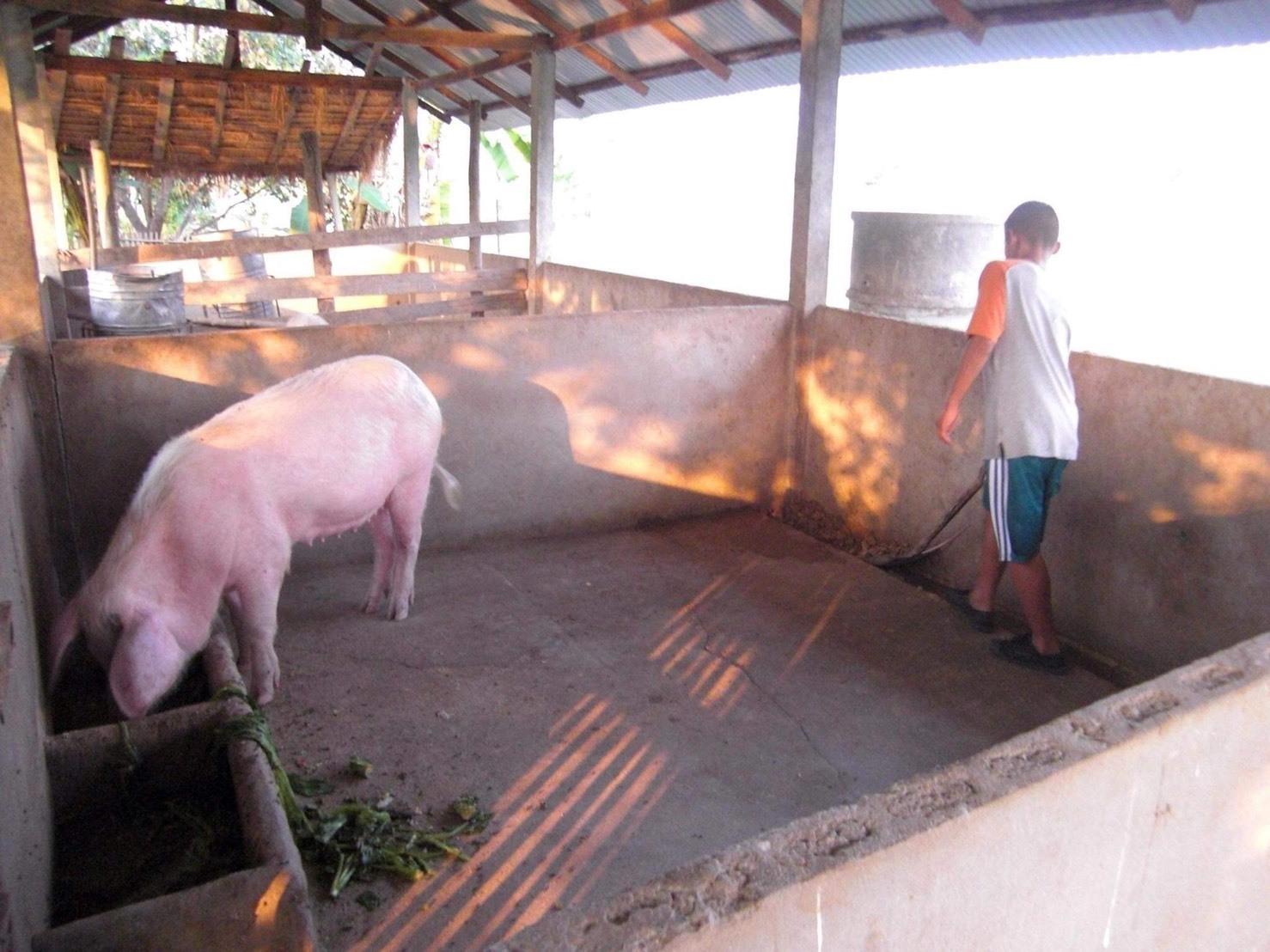 タイの養護施設では子供たちの「豚育」がある