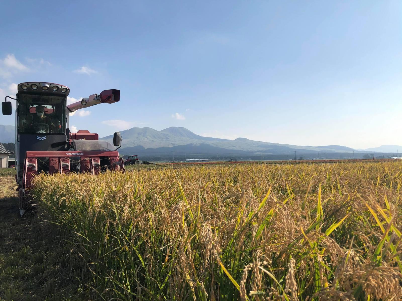お米農家を営む内田さんが収穫を行っている様子。内田農場では10品種以上のお米を栽培。
