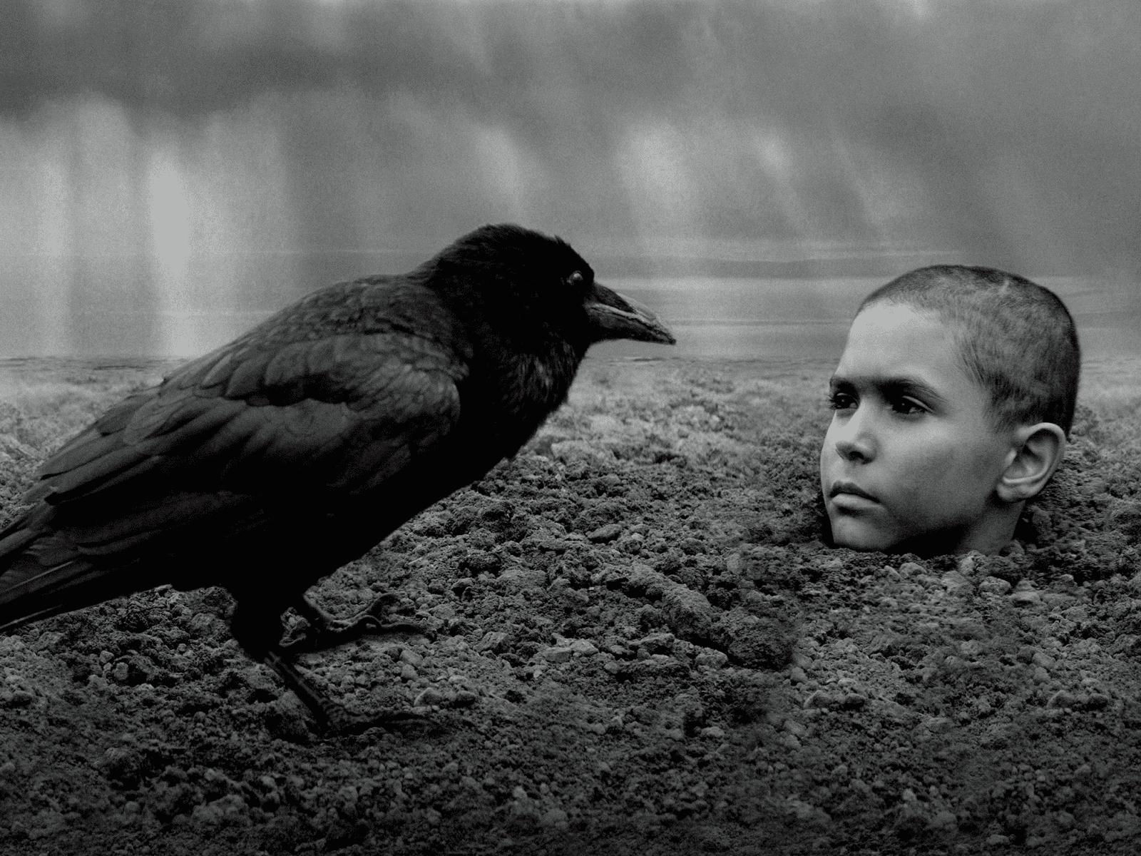 少年の非常の道行きが映し出す、人間の性と業。『異端の鳥』