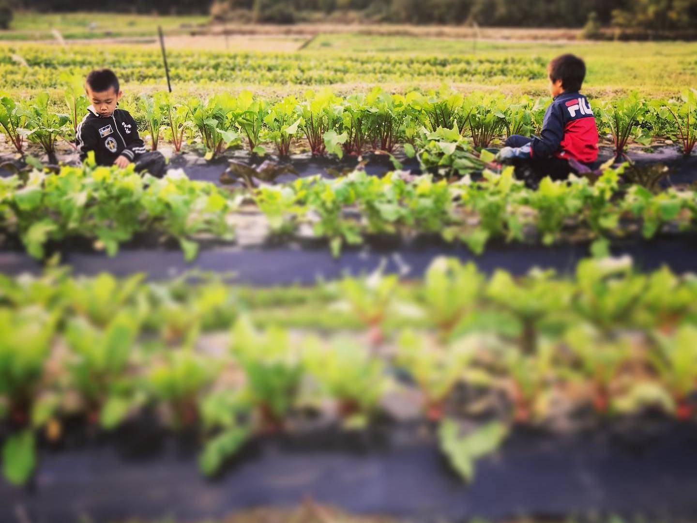 「田舎に住みたい!」と大阪から天草へ。移住した夫婦が地域に溶け込んだ秘訣とは