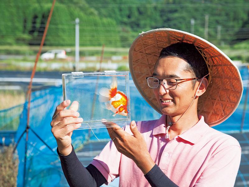 撮影のためにケースに入れた琉金を見る山田さん。「10万円の金魚に育てます!」。