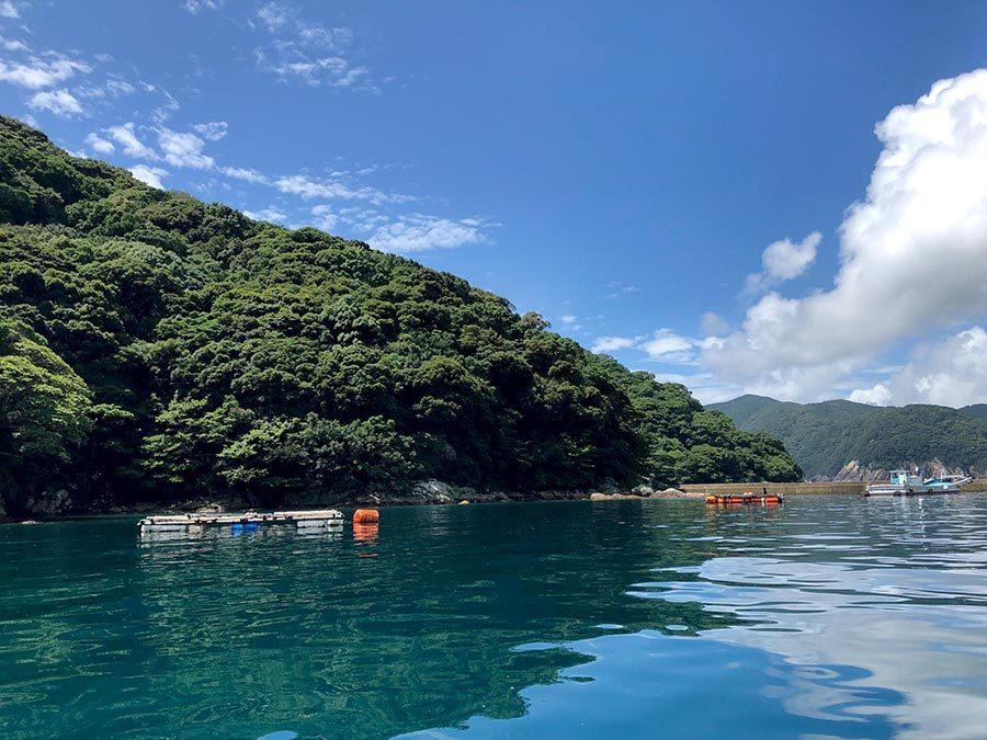 三重県熊野市二木島湾の定置網
