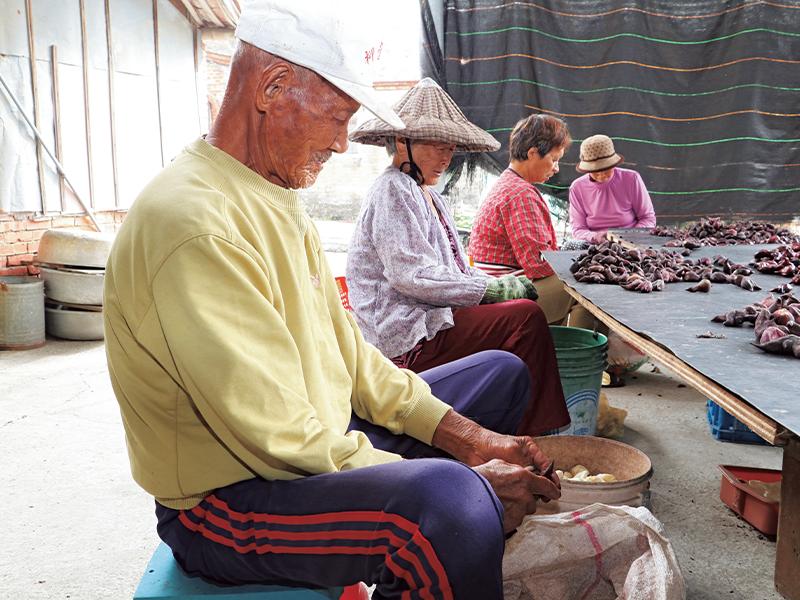台湾で日常的に食べられている菱の実の、通常は捨ててしまう殻を利用して地域の特産品づくりを行う。