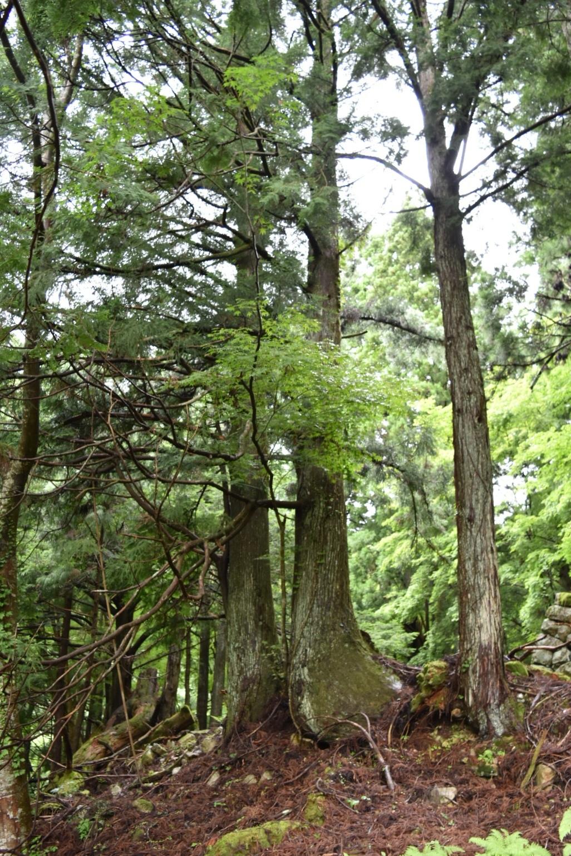 鬼の伝説が残る前鬼の里。なかには樹齢数百年の樹も。
