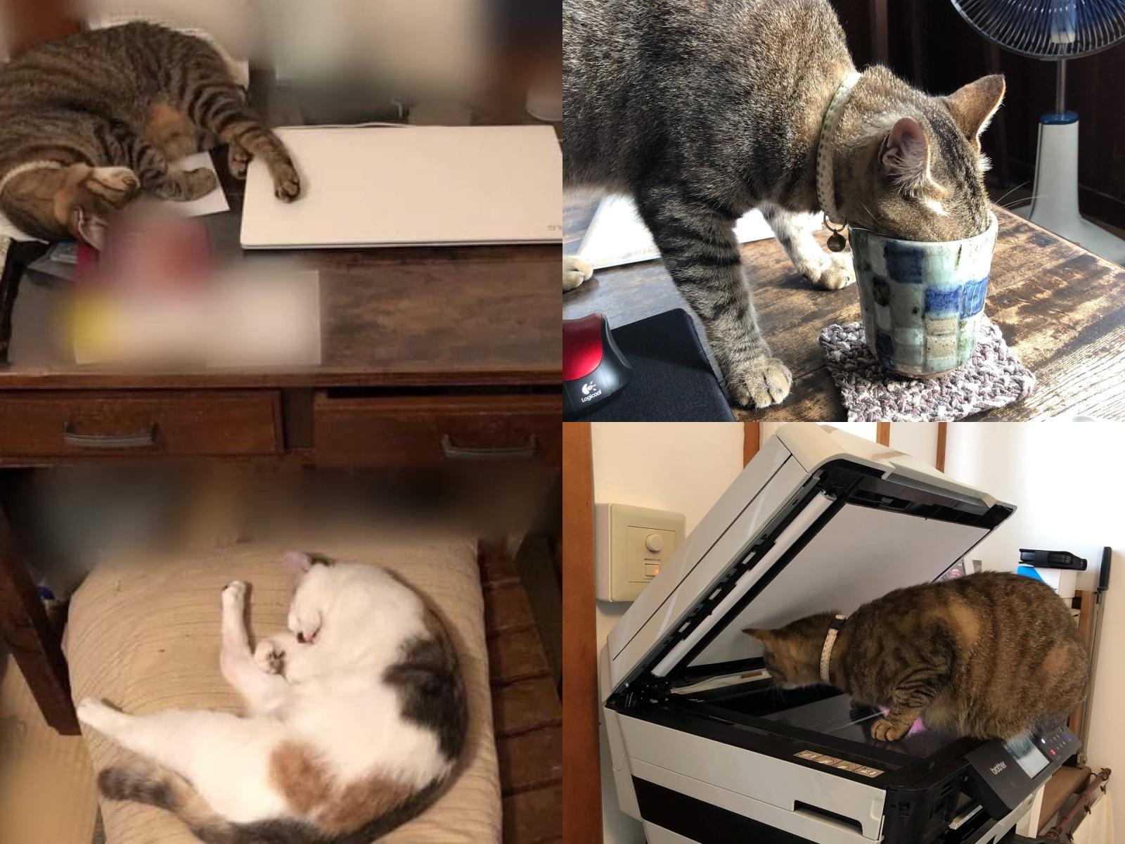 猫のいる家で在宅勤務あるある