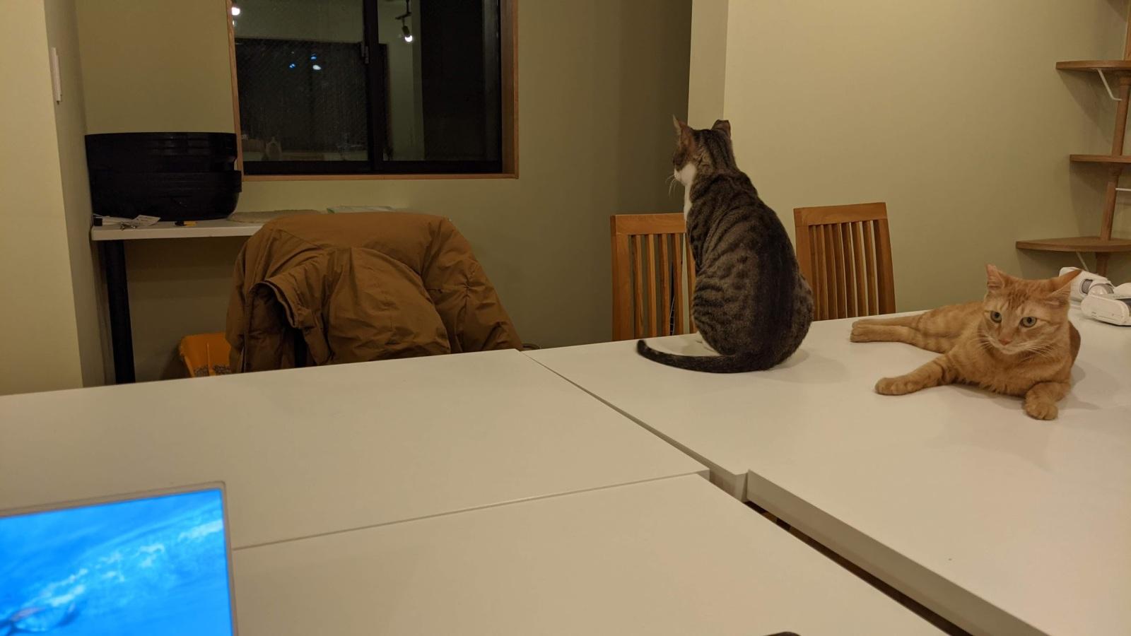 デスクの上にいる猫たち