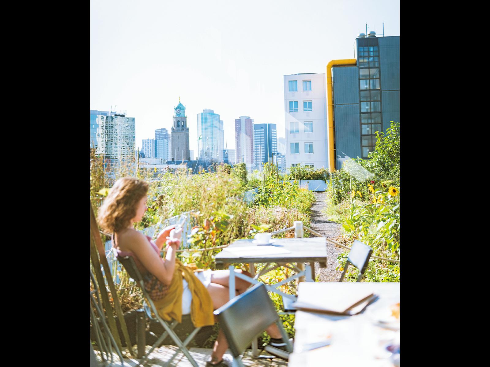 『OP HET DAK』の屋上庭園からの眺め。ロッテルダム市街を一望できる。