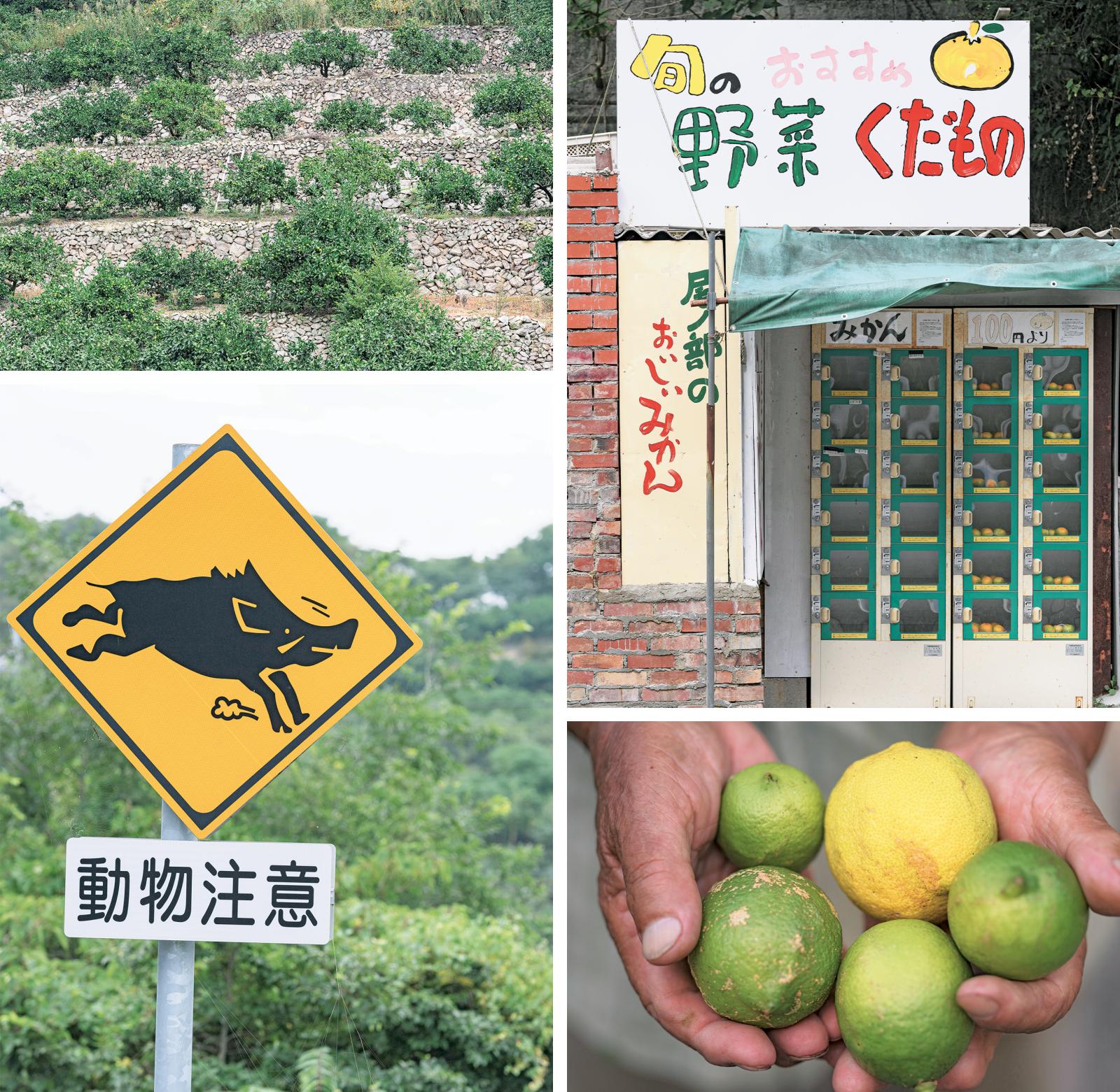 """右上:""""柑橘の島""""を感じるみかんロッカー。コイン式の無人販売所。左上:代々受け継がれてきたみかんの段々畑。石積みが美しい。右下:取材中、撮影で偶然通りがかった畑でいただいたレモンのお接待。これも柑橘の島ならでは。左下:「動物注意」の道路標識。イノシシが増え、農業被害も深刻。"""