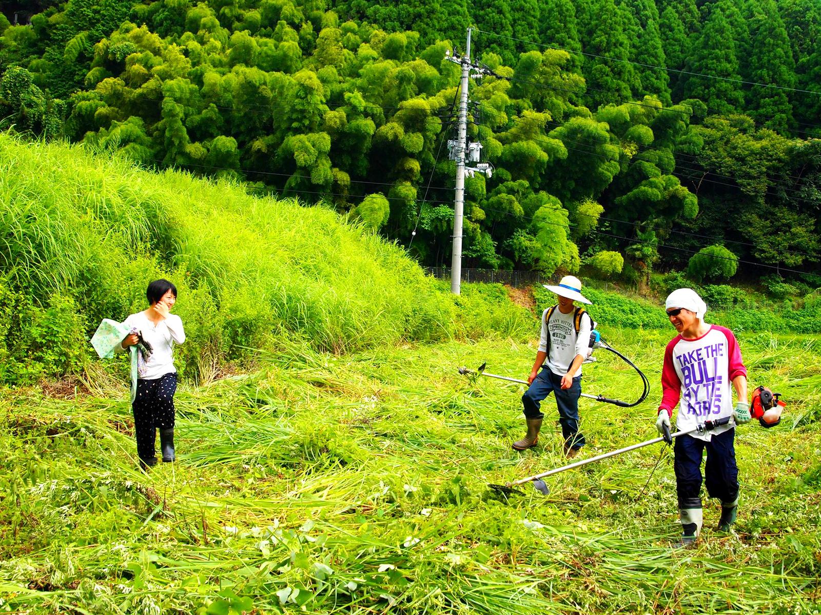 岡山県美作市の耕作放棄地で草刈り。草刈りは隊員仕事の「基本」だ。