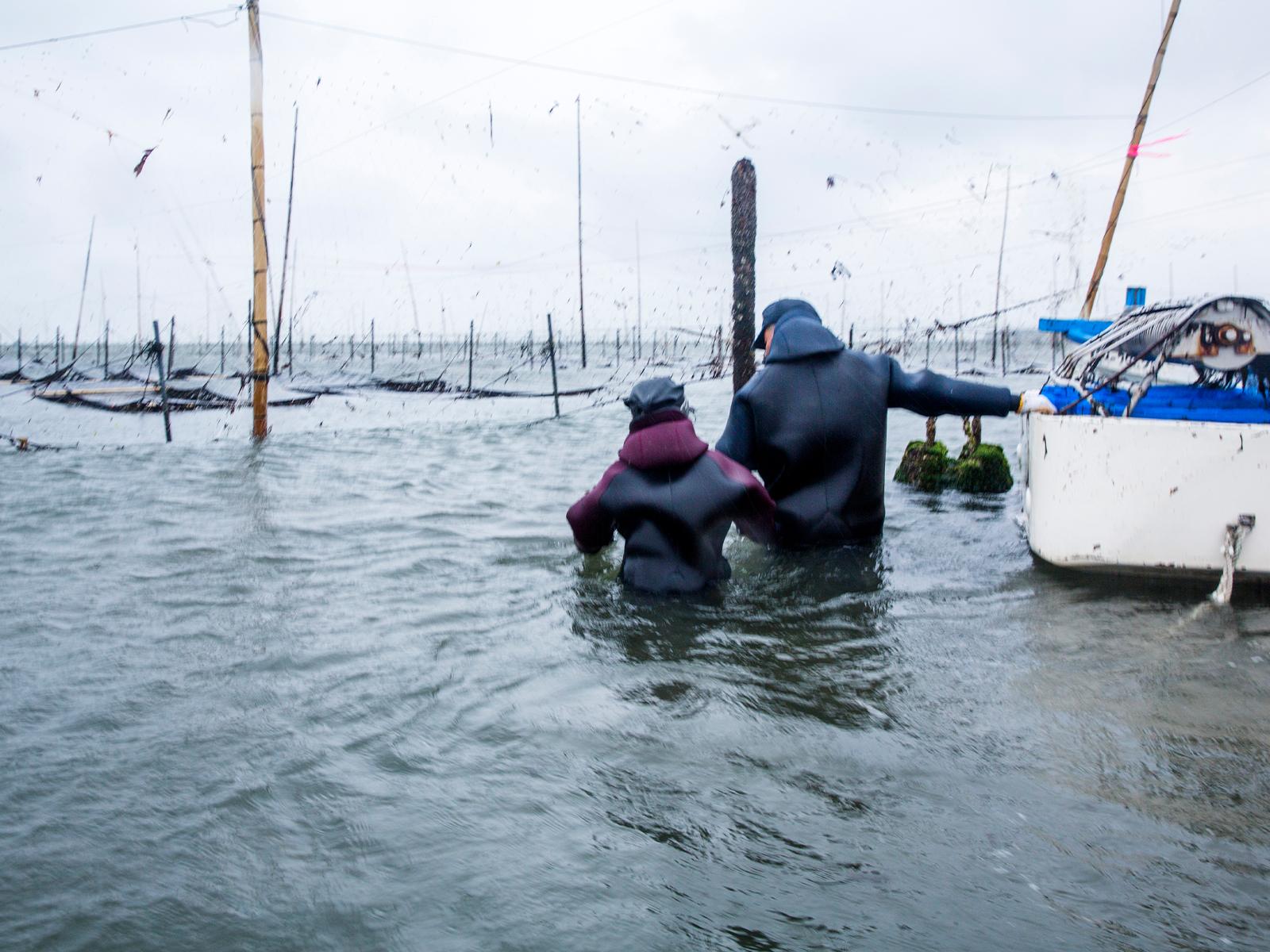 1月末〜2月の収穫シーズンになると二人で漁場に向かい、海に入って収穫作業を行う。