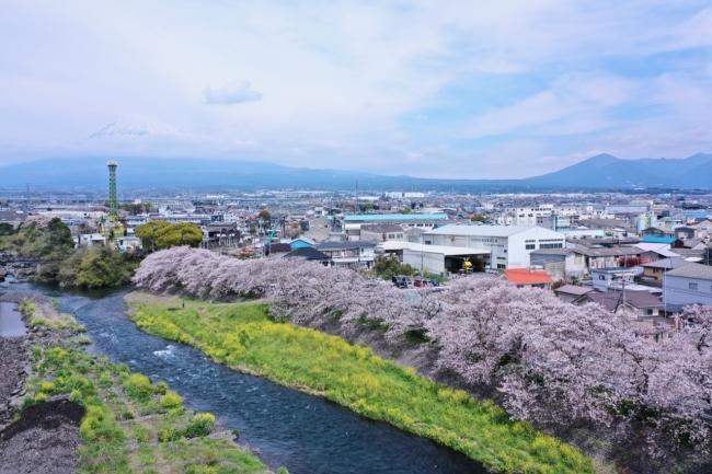 静岡県富士市の龍巌淵の桜