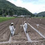 【ふるさと交流田】黒豆の定植作業