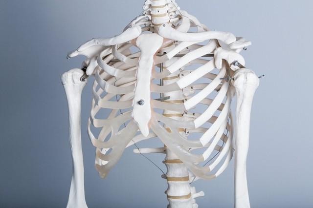 猫背が気になる(人体骨格模型)|フリー写真素材・無料ダウンロード-ぱくたそ (79)
