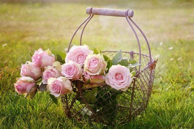 Free photo: Roses, Blossom, Bloom, Pink Rose - Free Image on Pixabay - 1566792 (1310)