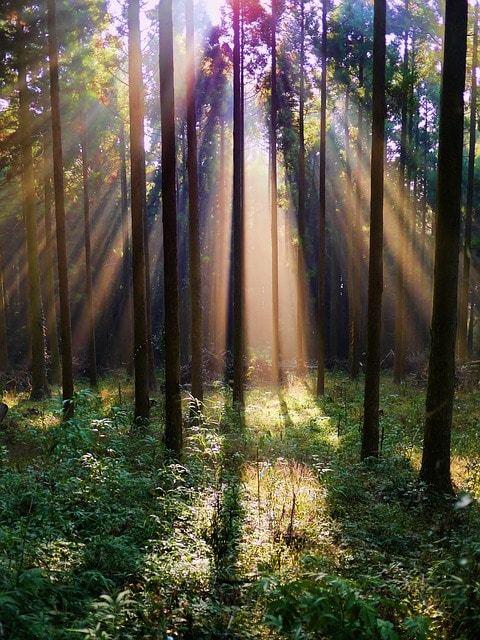 Free photo: Forest, Arboretum, Mountain, Woods - Free Image on Pixabay - 220719 (1314)
