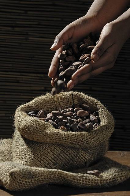 Free photo: Cocoa Beans, Cocoa, Cacao, Candy - Free Image on Pixabay - 499970 (7280)