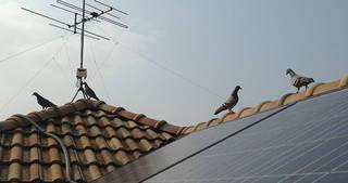 「太陽光発電設備の鳥獣被害」