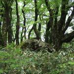 じわじわブーム中!「古事記」ゆかりの地・比婆山を歩くトレッキングモニターツアーが参加者募集中