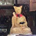 やっぱり猫が好き!?武将ゆかりの猫寺&猫神社