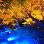 紅葉と歴史が気軽に楽しめる!この秋行きたい都内の大名庭園