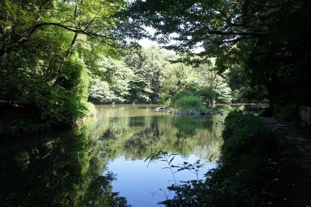 東京大学本郷キャンパスにある通称「三四郎池」