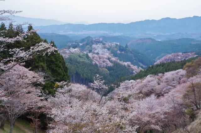 吉野山一面に咲き誇る桜