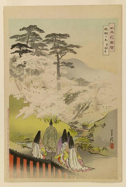 『醍醐の花』(尾形月耕『日本花図絵』)