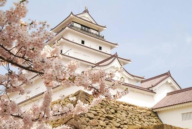 会津若松城では、例年4月中旬頃に開花となる。日本で唯一...