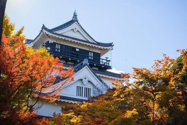 写真提供:岡崎市 (11806)