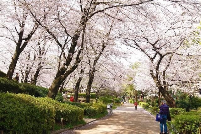 隅田公園(東京都墨田区)