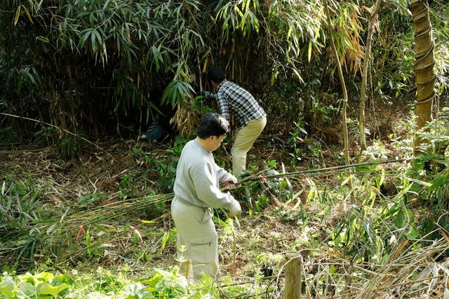 弓矢の材料となる青竹の伐りだしから始まります。
