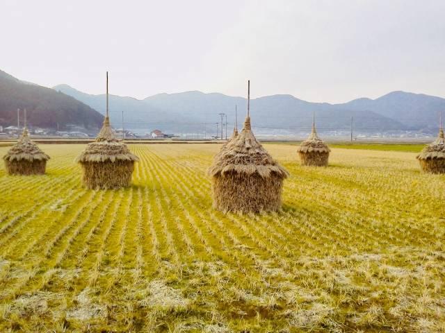 藁を重ねた「わら塚」。熊野地方の方言で「スズキ」