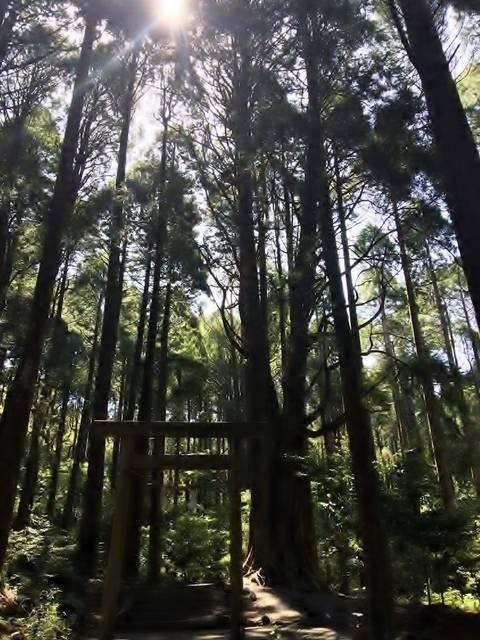 霧島神宮の裏手にある山神社