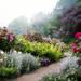 バラの庭の脇役たち!バラを彩るコンパニオンプランツを植えてみませんか?
