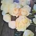 【水あげ】がむずかしい!草花を綺麗に咲かせるには?