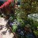 お花が好きな方に大人気!宝塚のオープンガーデンフェスタを取材しました。