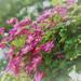 撮って楽しむガーデニング!美しい花の写真を撮る方法とは?