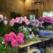 バラと庭の祭典!第19回 国際バラとガーデニングショウ その1