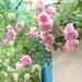 バラと庭の祭典!第19回 国際バラとガーデニングショウ その3