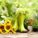 寄せ植えにも花壇にも!夏のガーデニングにおすすめの花10選